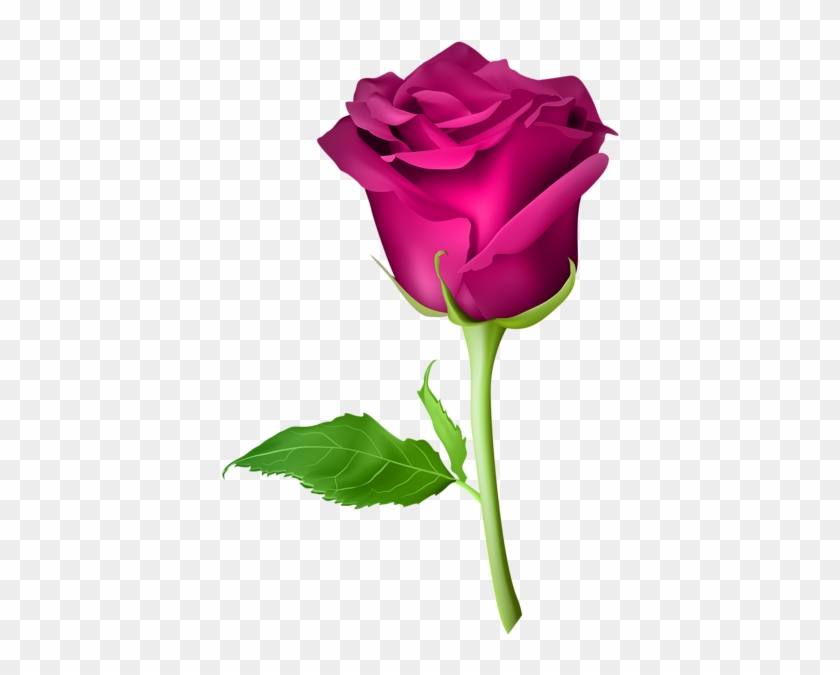 Rose Pink Transparent Png Clip Art Image - Purple Roses Png #88023