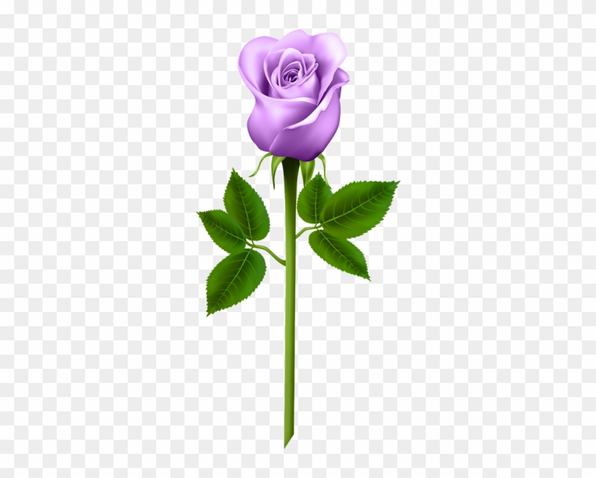 Purple Rose Transparent Png Image - Word Cards For Parts Of A Plant #88038
