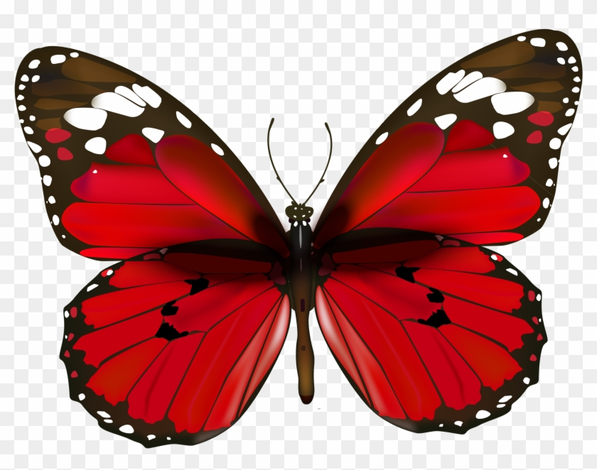 Butterfly Clipart Real - Butterfly Clipart Real #88237
