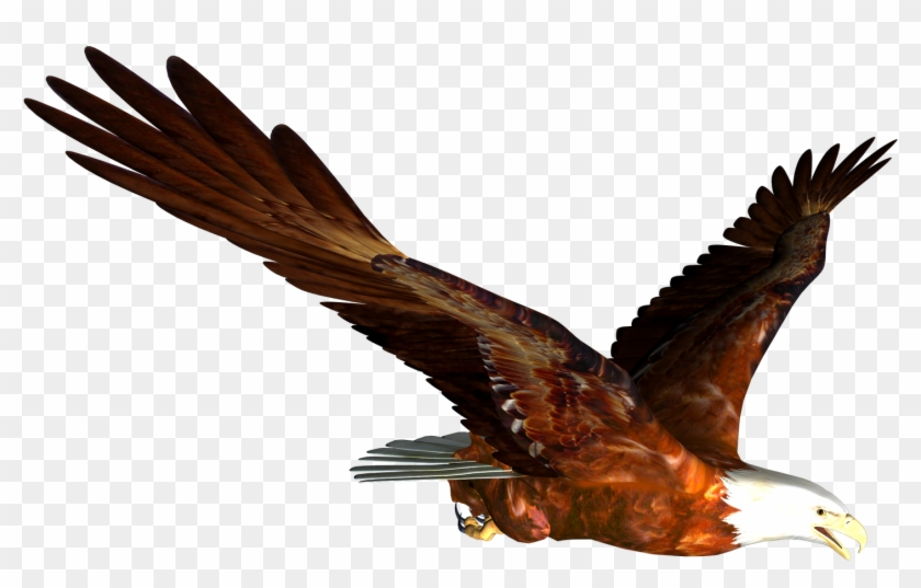 Very Attractive Design High Resolution Clipart Free - Flying Eagle Png #88263