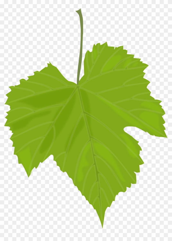 Fall Clipart Grape - Grape Leaves #88452