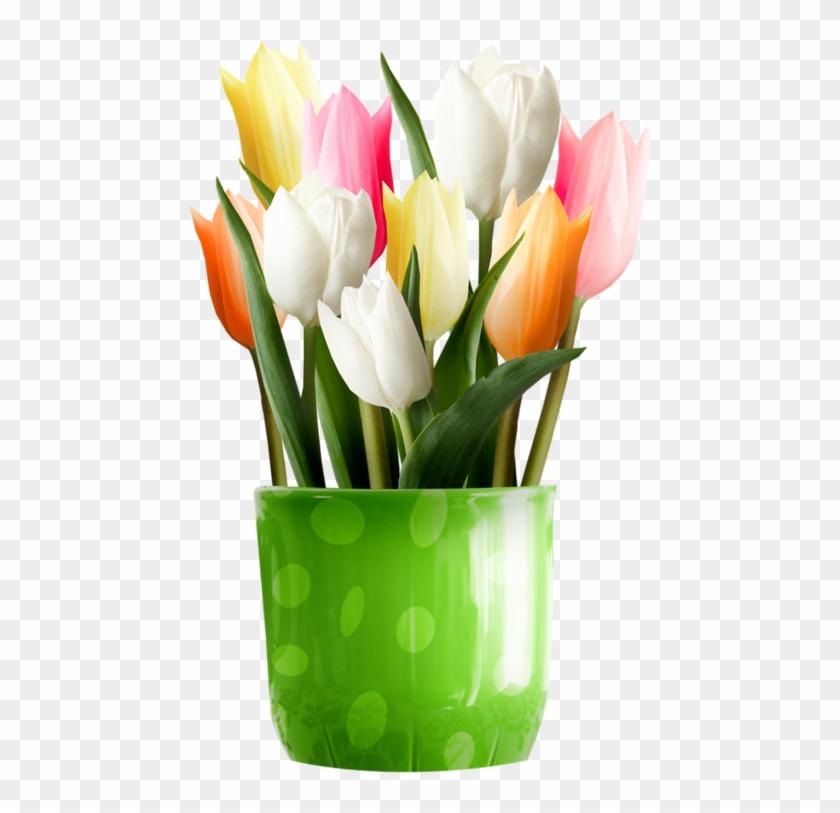 Pin By Erzsébet Szilágyi On Csak Tulipánok - Tulip #89958