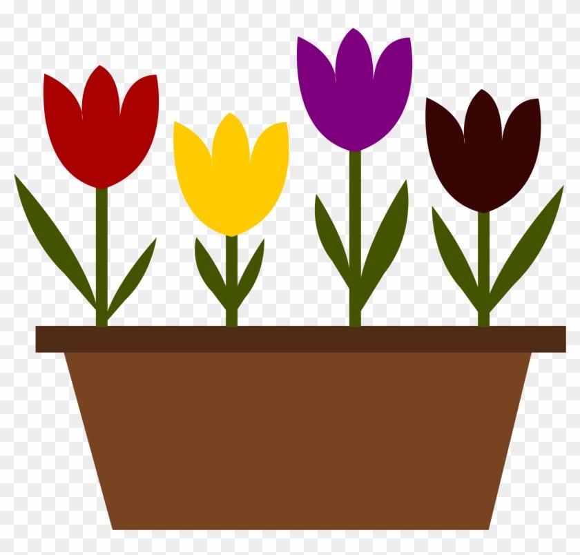 In A Pot, Just Random - Sprenger's Tulip #90013