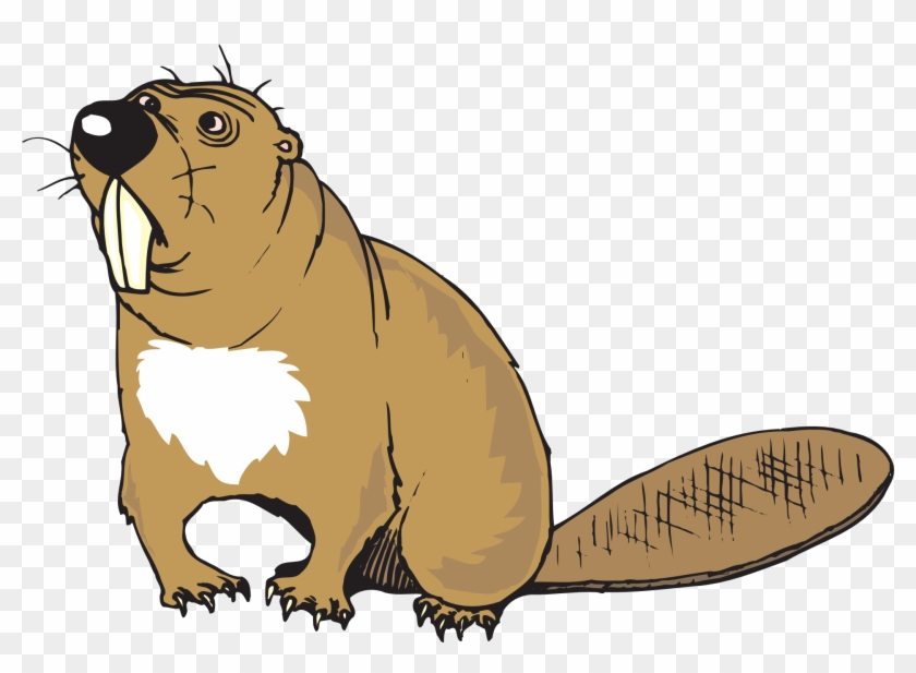 Confused Cartoon, Beaver, Art, Animal, Tail, Teeth, - Beaver Clipart Png #90130