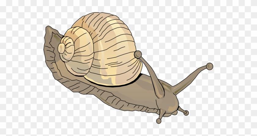 Snail Clipart Schliferaward - Clipart Snail #90174