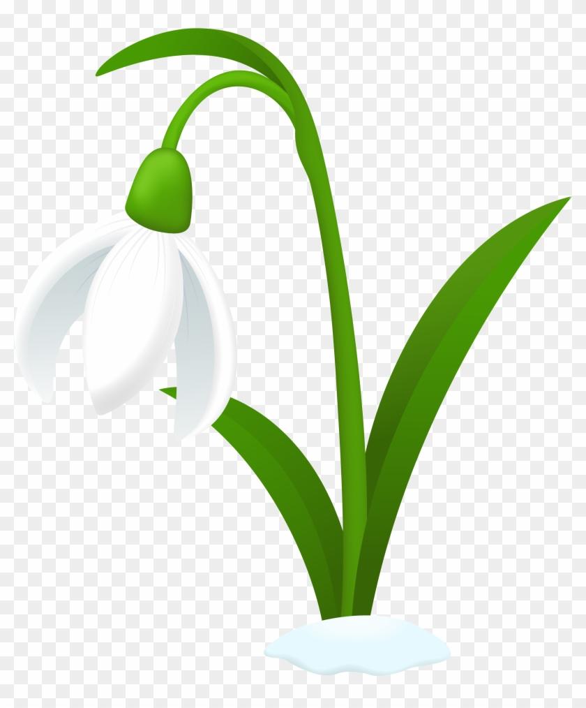 Snowdrop Flower Tattoos - Snowdrop Clipart #90207