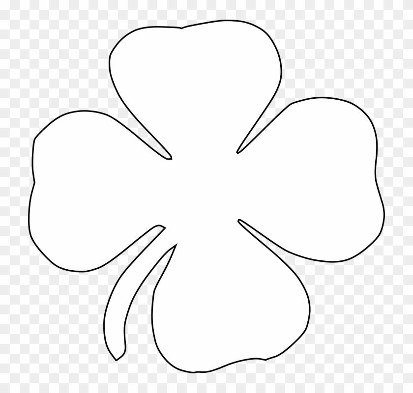 Clover Four-leaf Clover Luck Lucky Shamrock - White Four Leaf Clover Png #90473