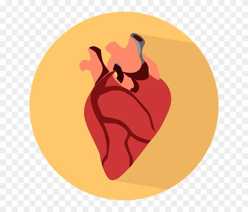 Heart-2411130 - Heart Organ Png #91724