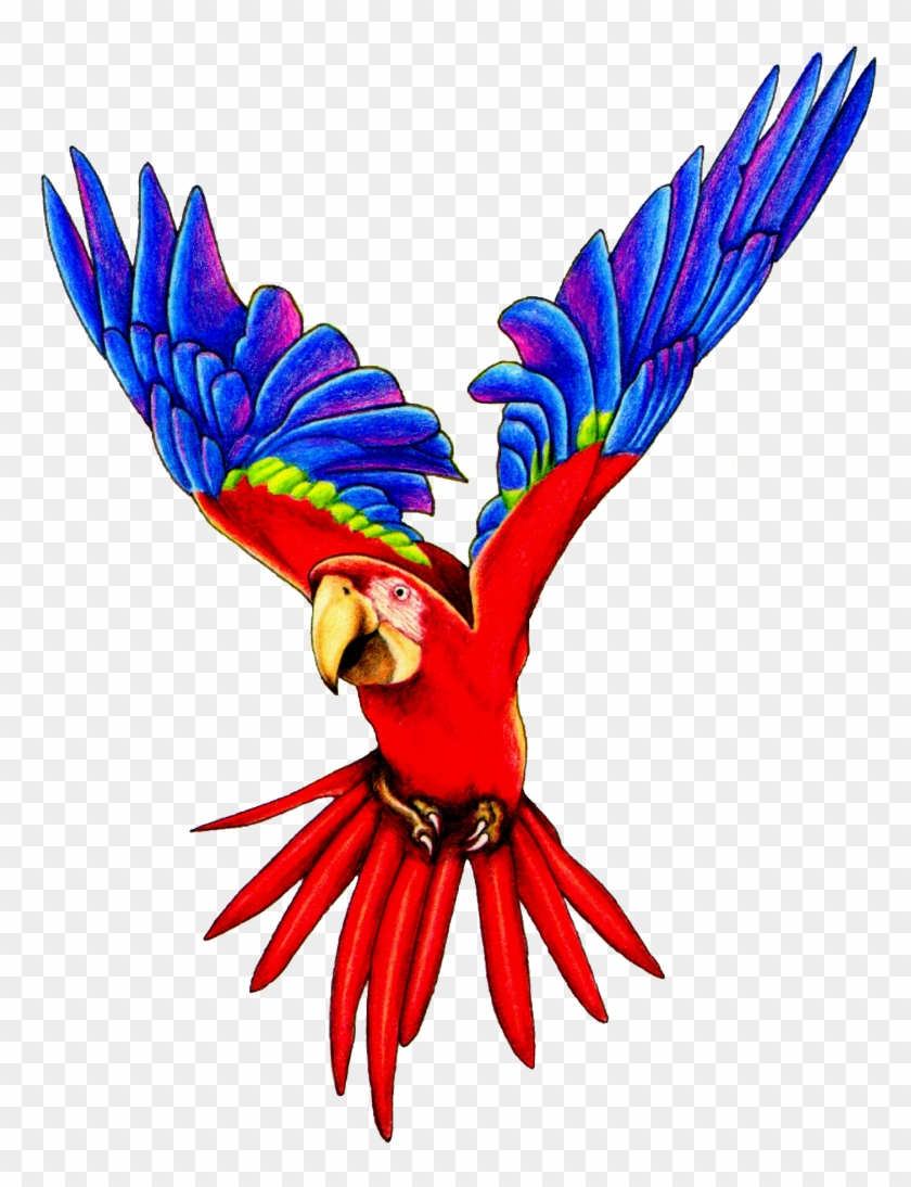 Macaw Clip Art - Flying Parrot Png #92086