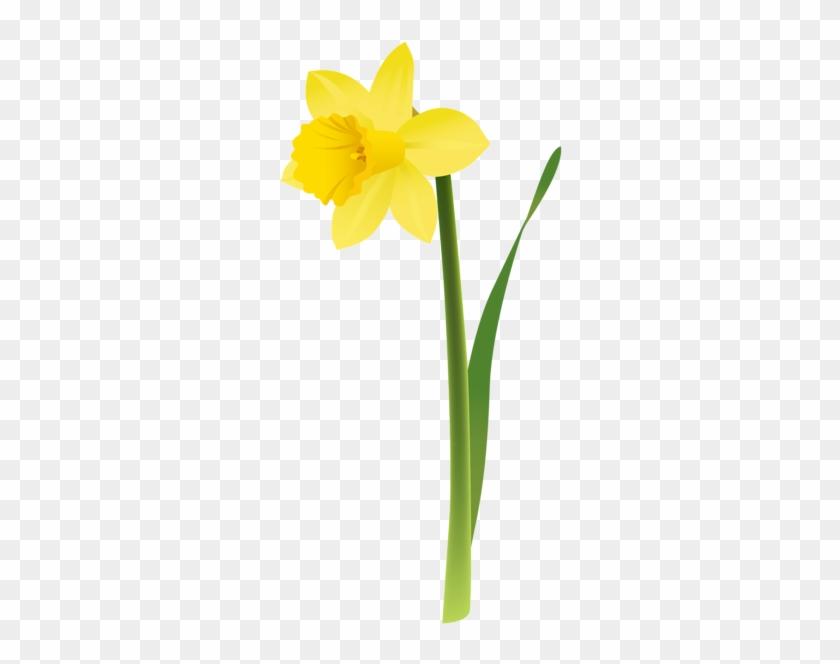 Http - //favata26 - Rssing - Com/chan-13940080/all - Clip Art Daffodil #92568