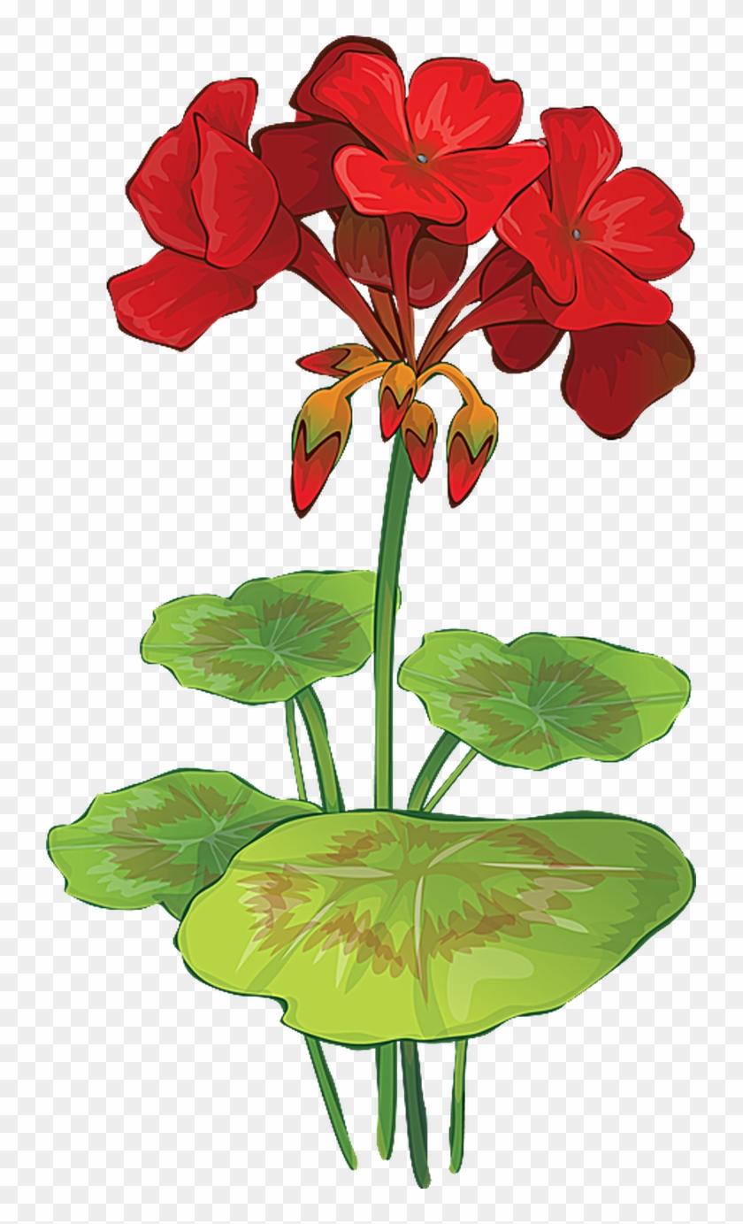 Grab This Free Summer Flower Clip Art - Geranium Flower Vector #93346