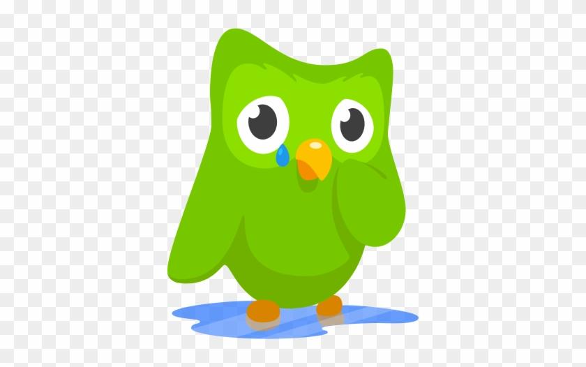 Duolingo Crying Owl #504039