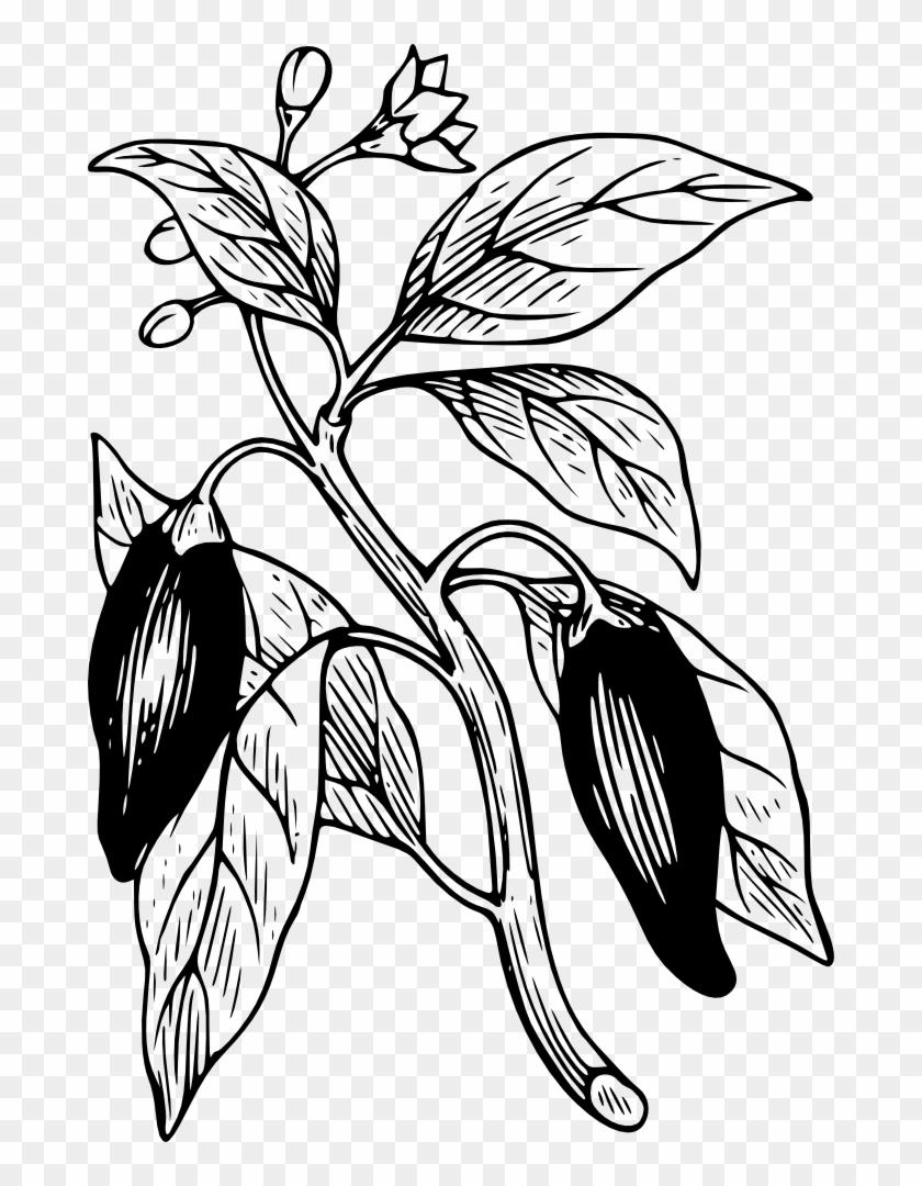 Capsicum Clip Art Gambar Animasi Pohon Cabe 680x1000