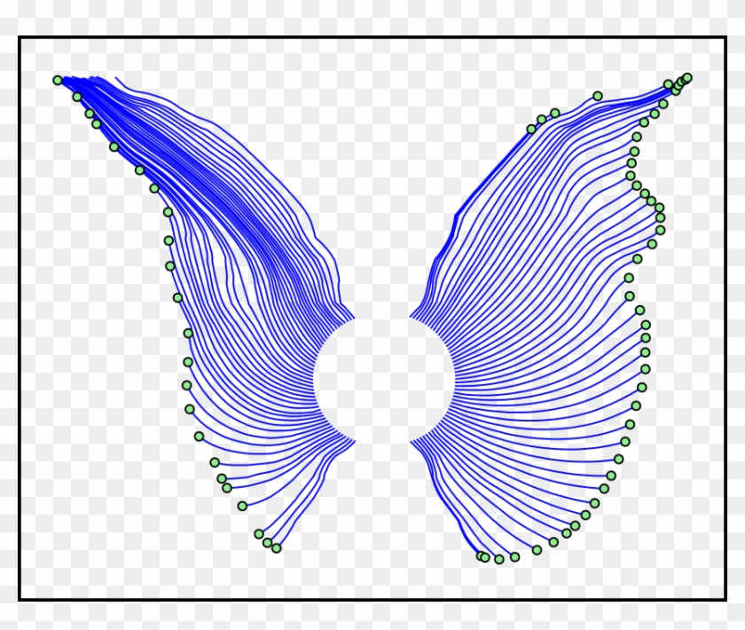 Butterfly - - Movement Of Butterfly's Wings #511030