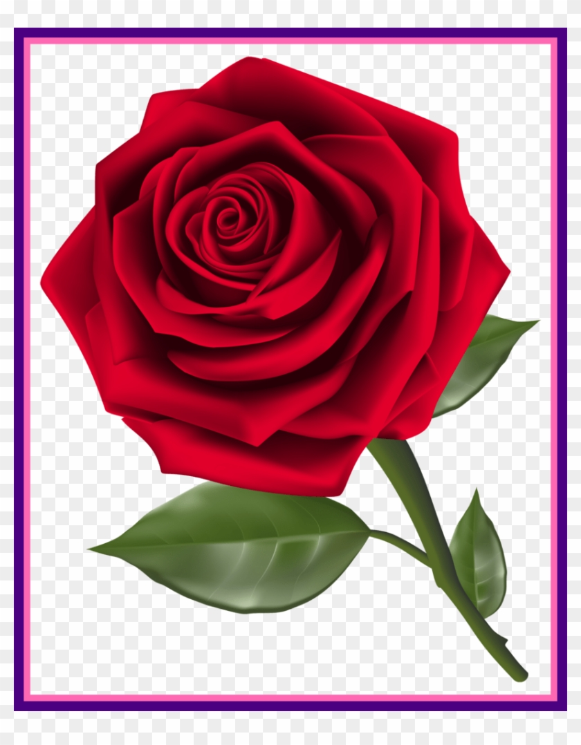 Shocking Red Rose Png Clipart Pic For Flower No Background