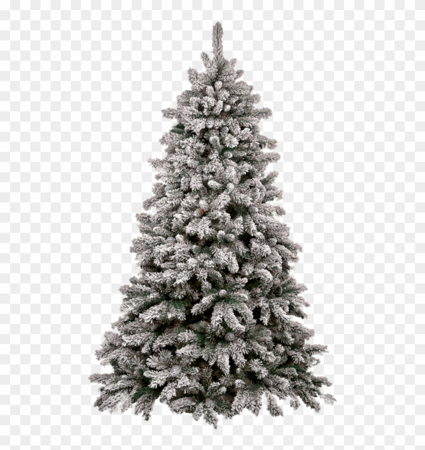 Christmas Tree Png Christmas Tree Snow Png Free Transparent Png