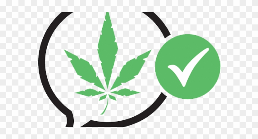 New Board For Cannabis Party - Legalize Marijuana Party Nz #530158