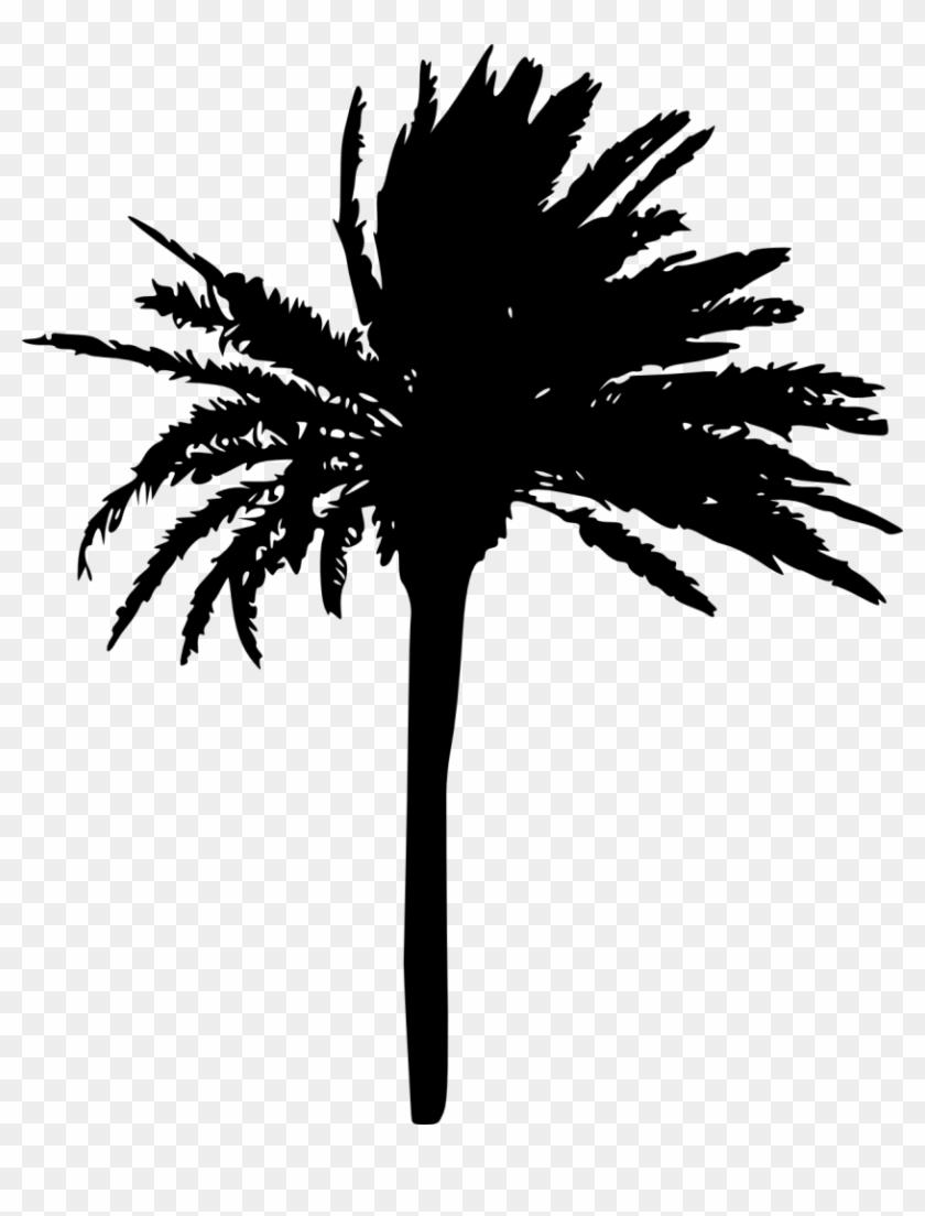1223 × 1500 Px - Transparent Palm Trees #530359