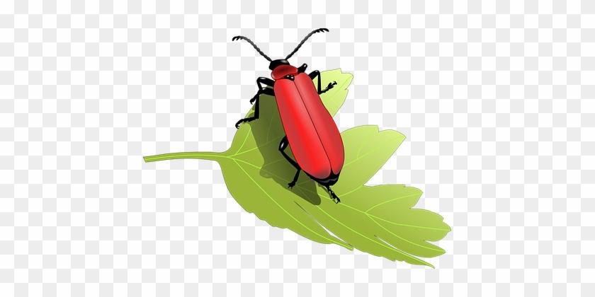 Beetle Bug Insect Leaf Nature Animal Anten - Beetles Clip Art #531325