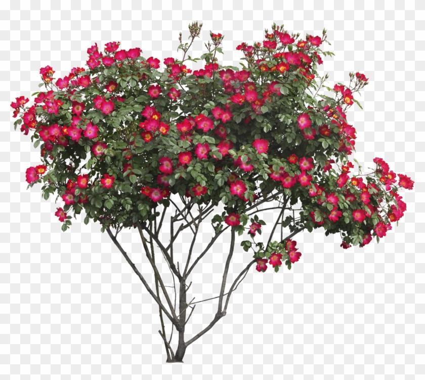 Bush Png Image - Flower Bush Png - Free Transparent PNG Clipart