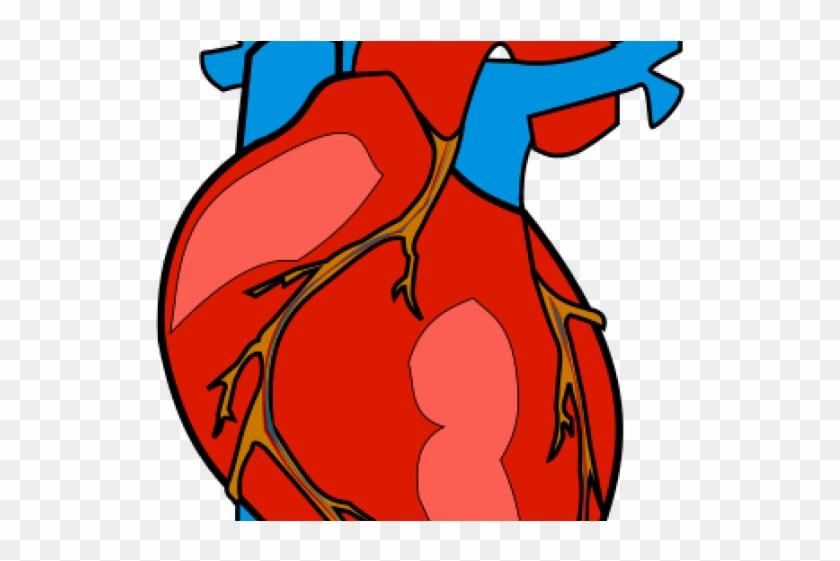 Human Heart Clipart - Human Heart Clipart #94677