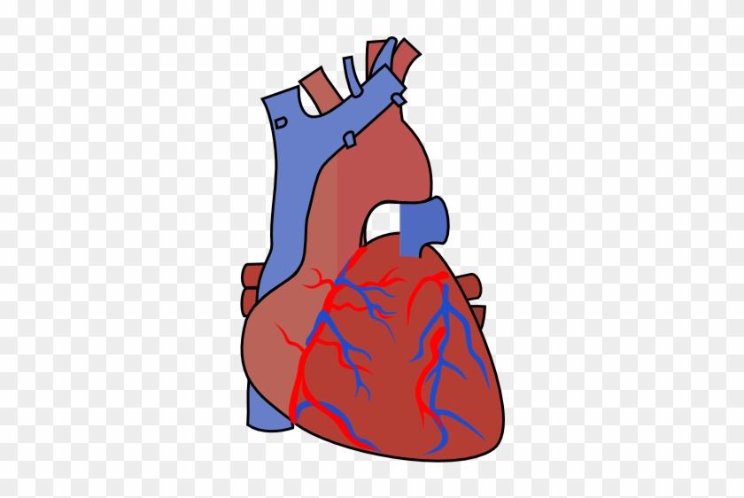 Heart Diagram Vein Clip Art - Vein Clipart #94682