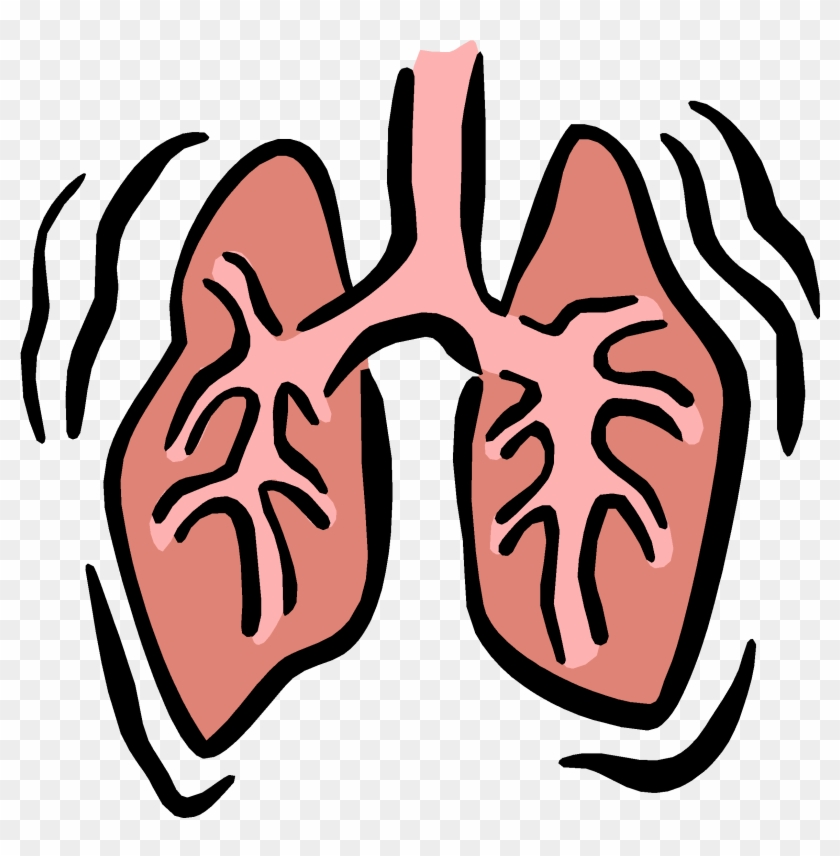 Small Lungs Cliparts - Respiratory System Clip Art #94772