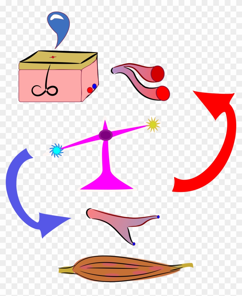 Clipart - - Physiology Clipart #94956