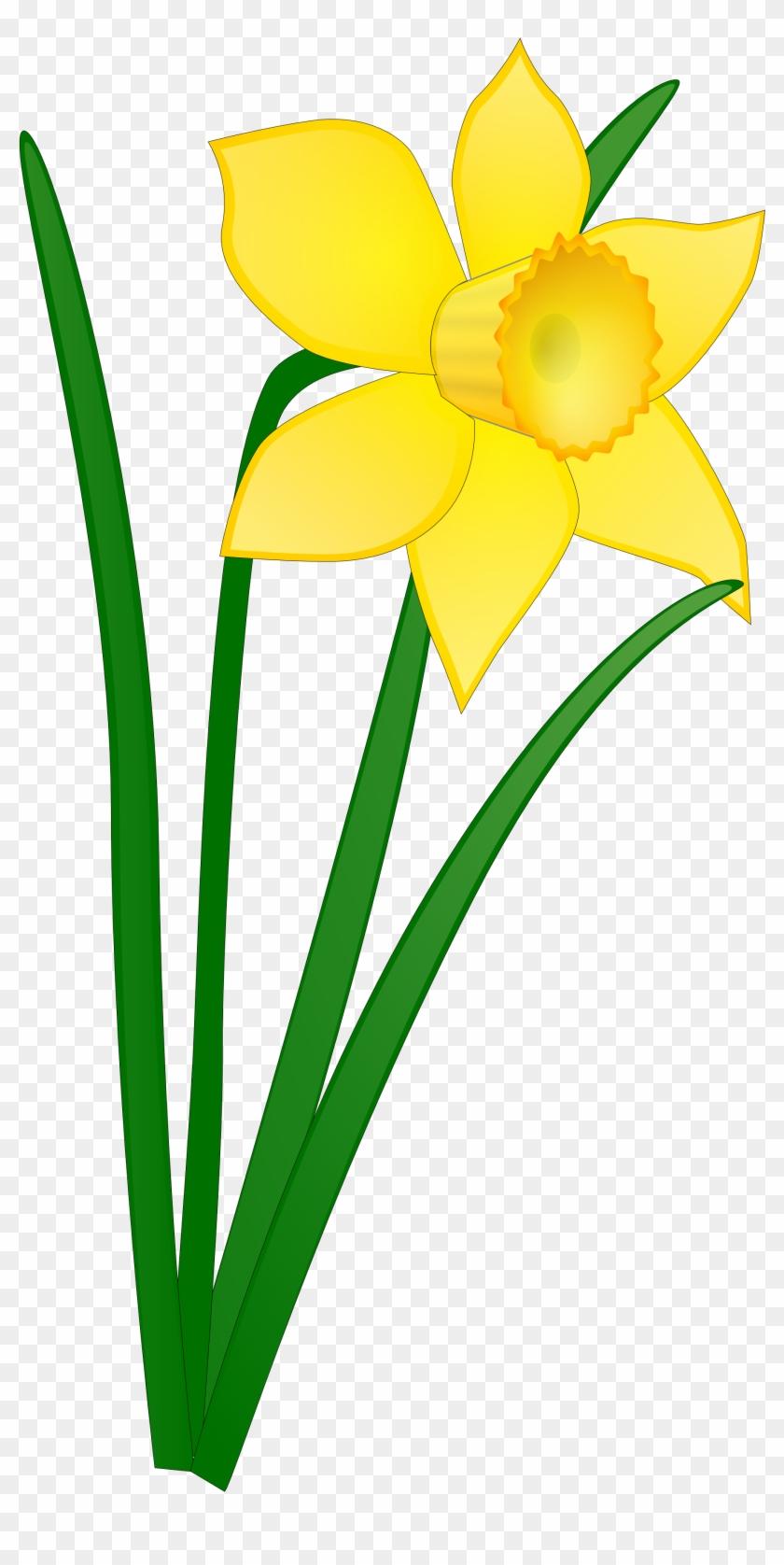 Daffodil Flower Clip Art Clipart Panda Free Clipart - Daffodil Clip Art #95152