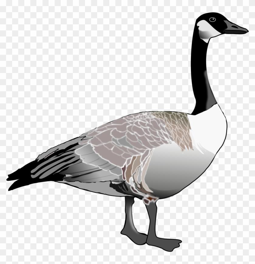 Top 79 Canada Clip Art - Canada Goose Clipart #95339