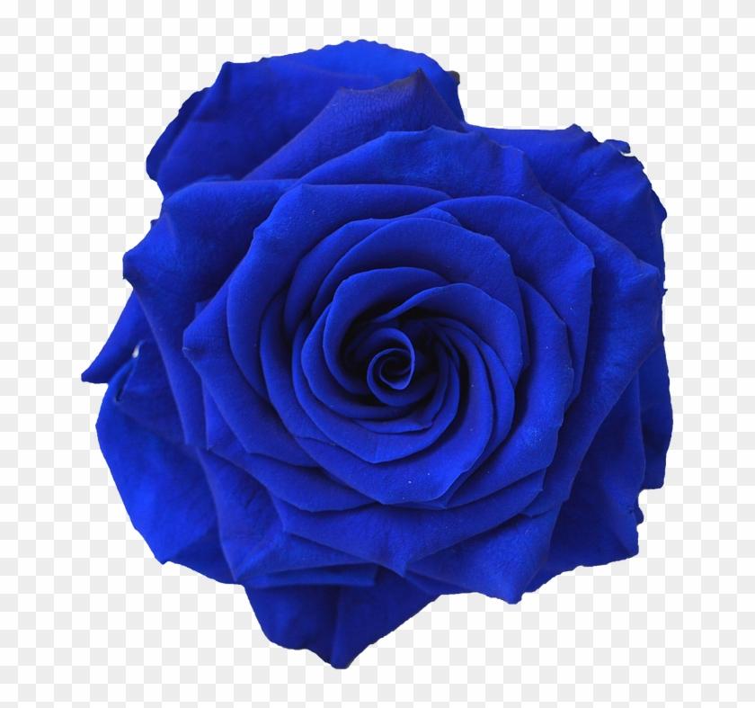 Blue Rose Flower Navy Blue Clip Art - Blue Rose Flower Navy Blue Clip Art #95490