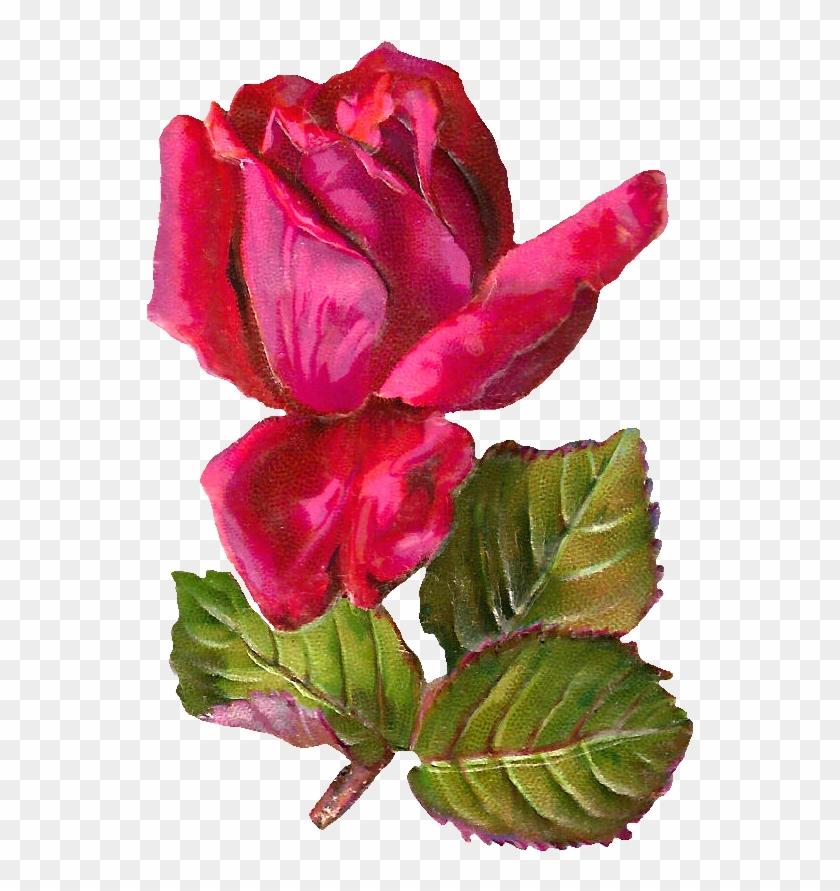 Pink Rose Clipart Dozen Rose - Antiqueimages Blogspot Com Rose #95493