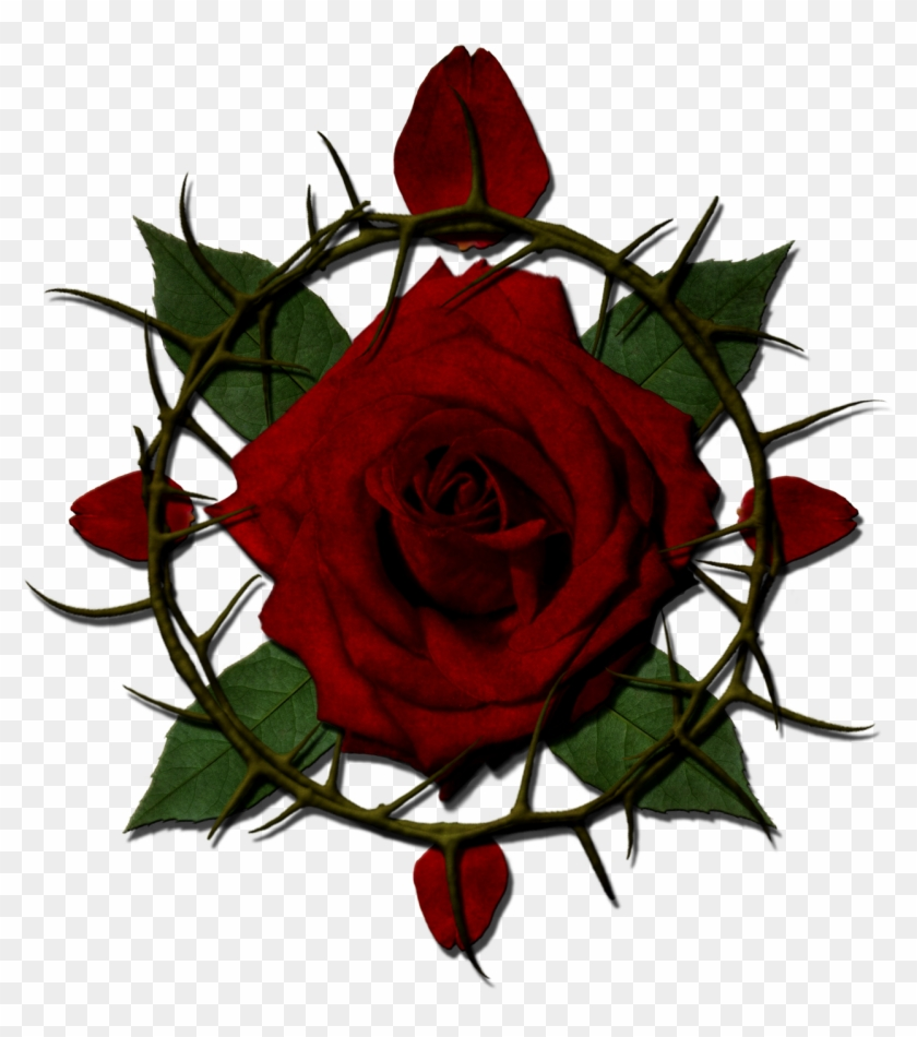 View Forum - Roses With Thorns Png #95513