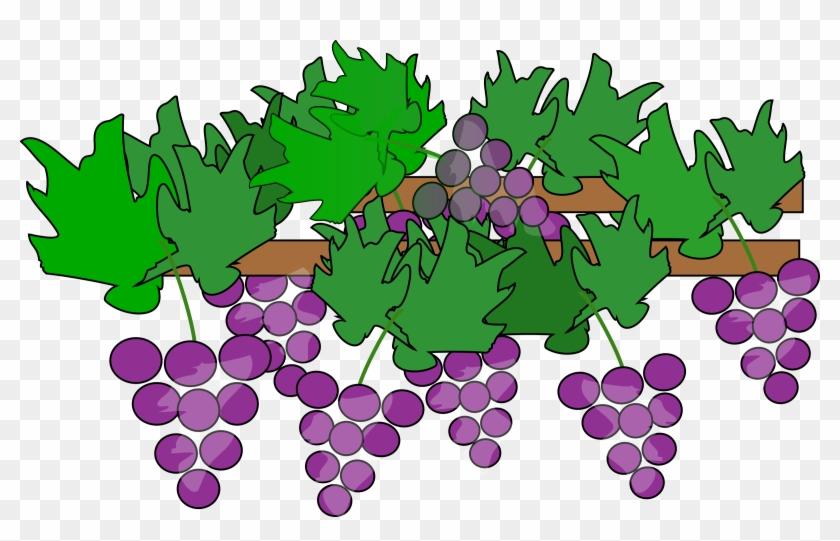 Clipart - Grape Vines Clipart #96728