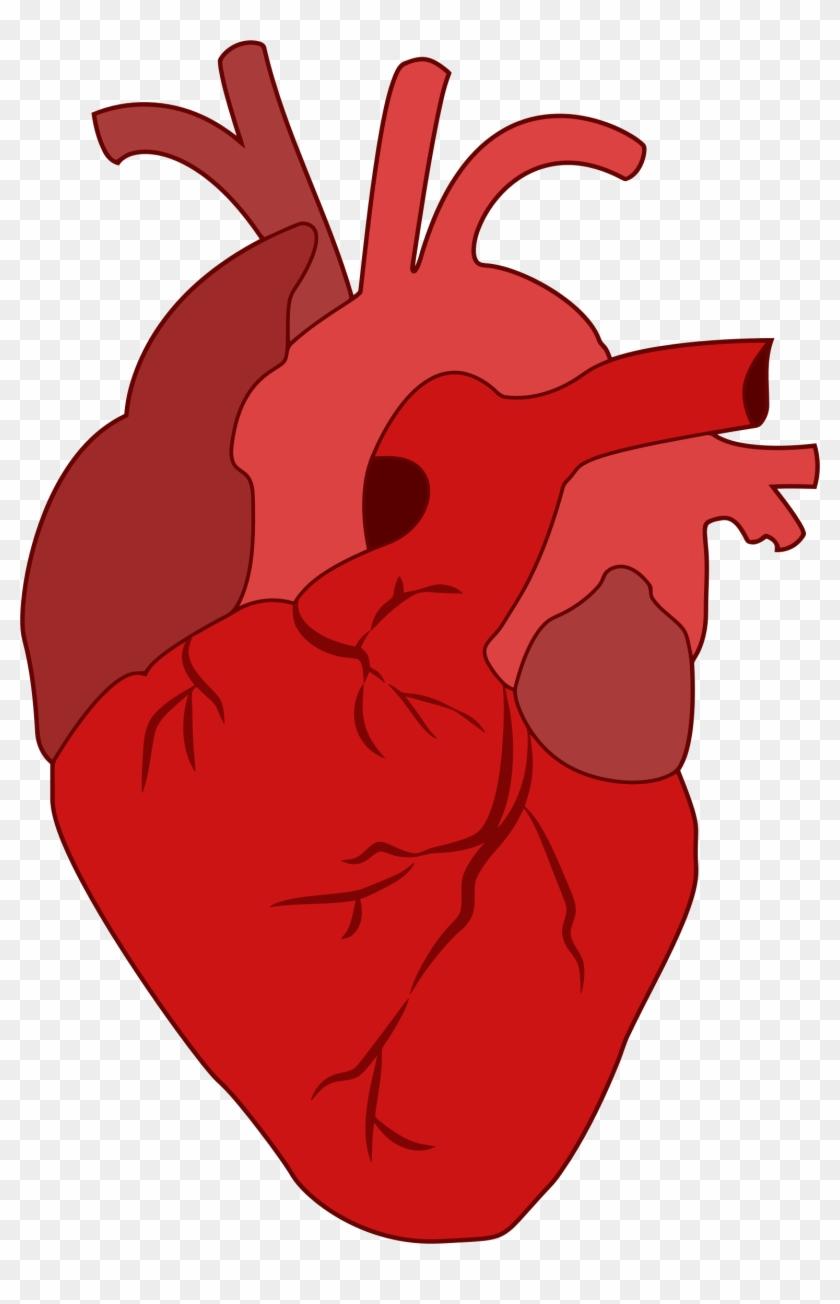 Cartoon Heart - Realistic Heart Clipart #99247