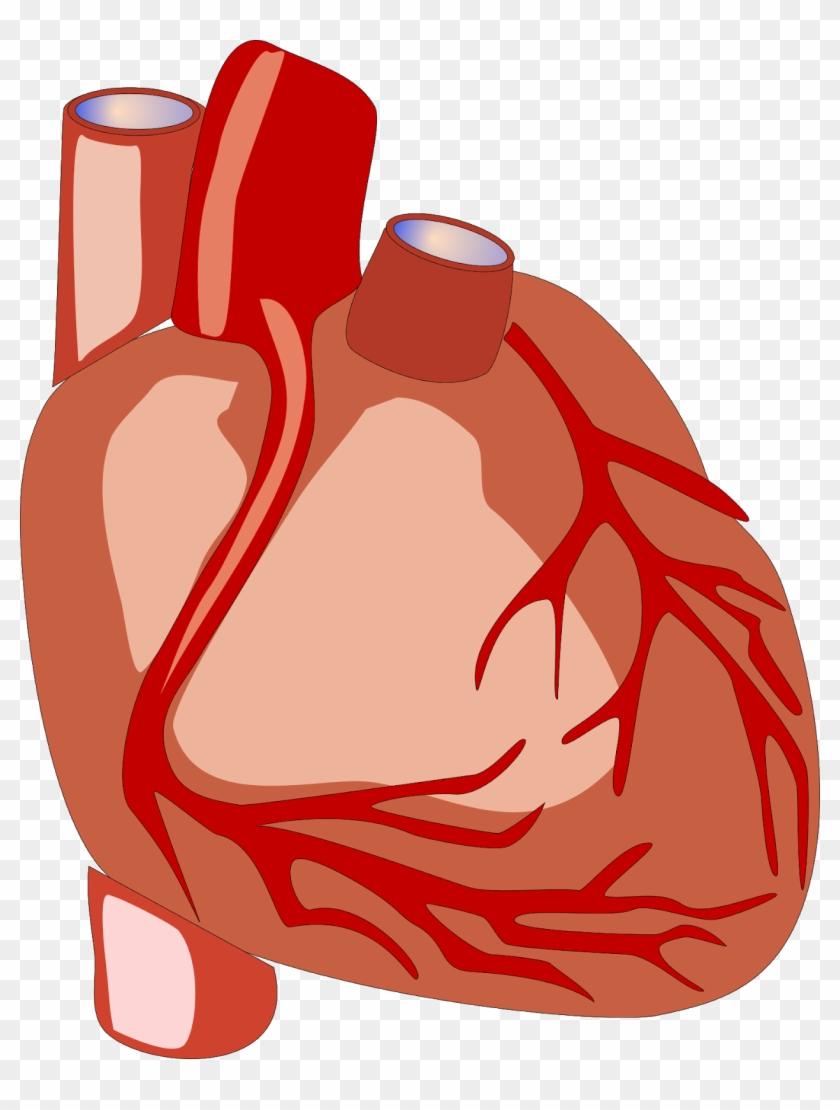 Congestive Cardiac Failure - Heart Human Clipart Gif #100014