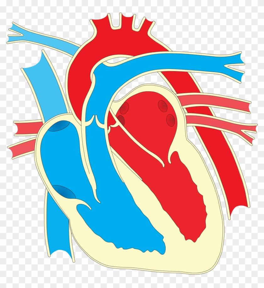 Big Image - Heart Diagram #100077