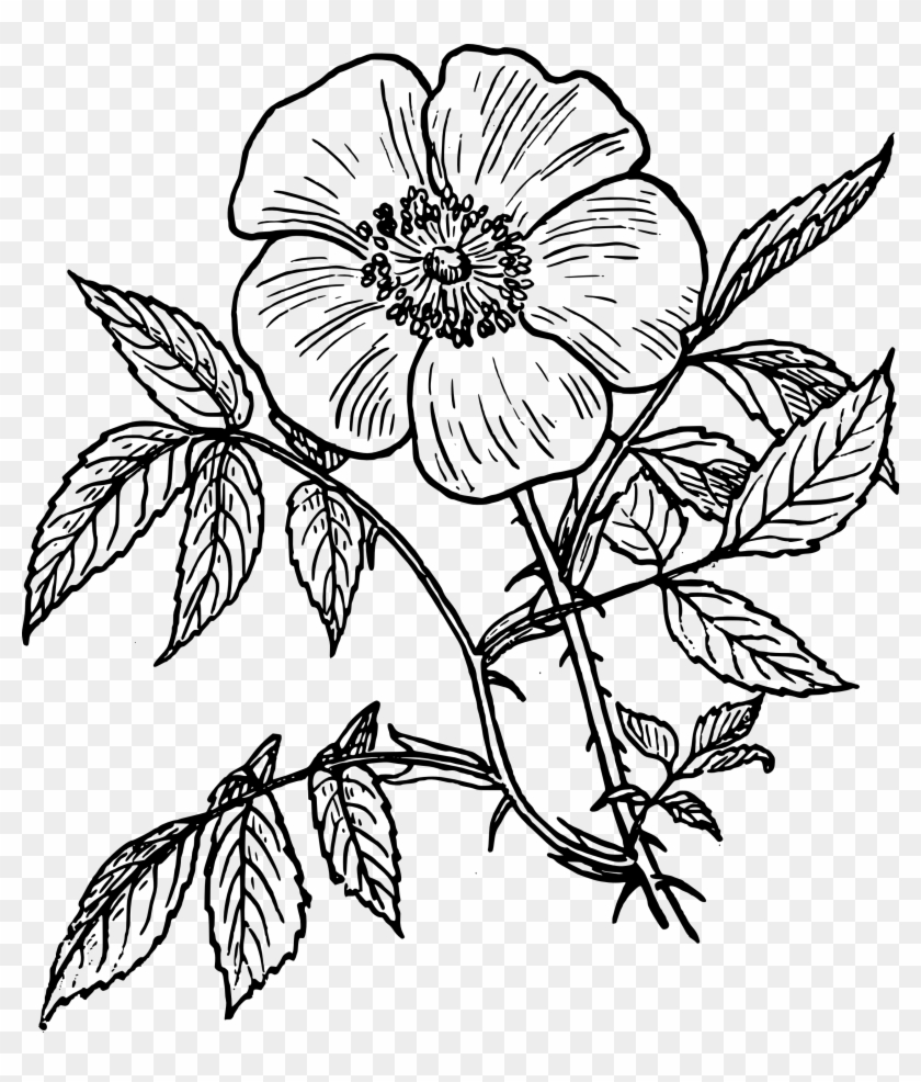 Rose Line Drawing - Day Of The Dead Flower Drawings #101942