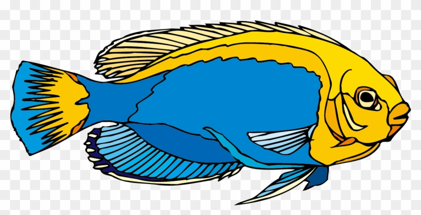 Freshwater Angelfish Ornamental Fish Clip Art Freshwater Angelfish