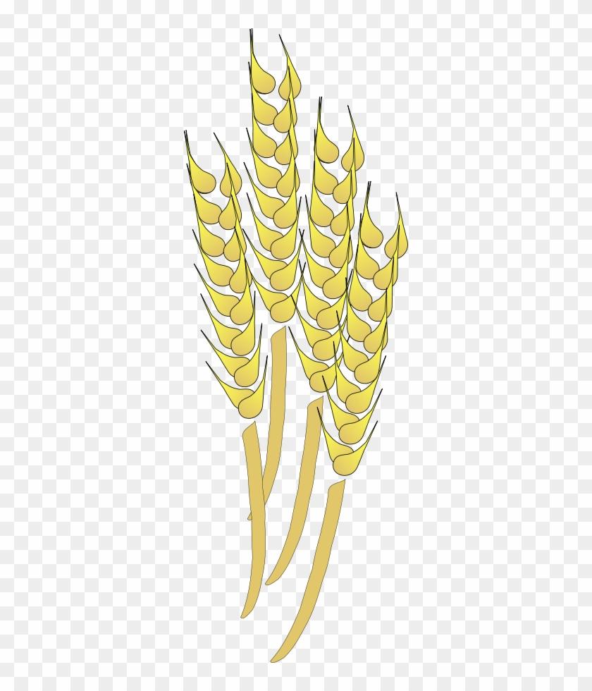 Wheat Png - Wheat Clip Art #567837