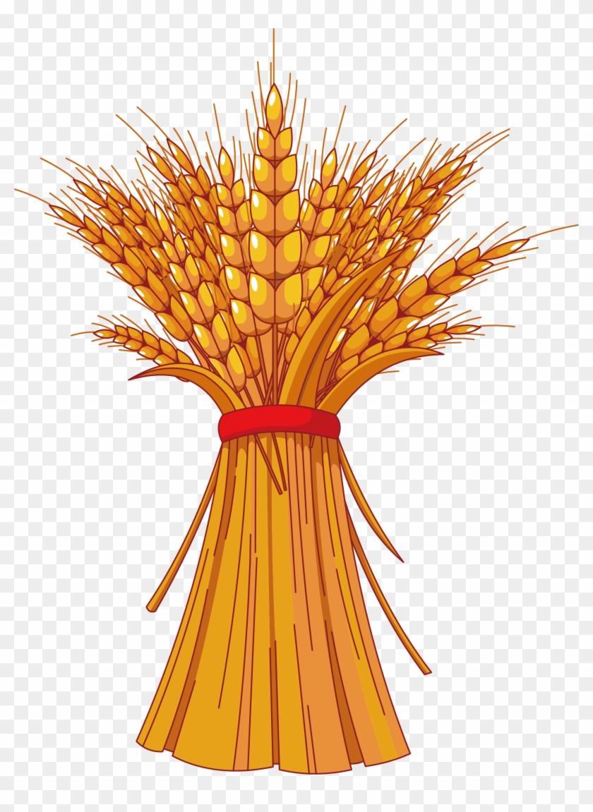 Harvest Festival Autumn Free Content Clip Art - Wheat Clip Art #568165