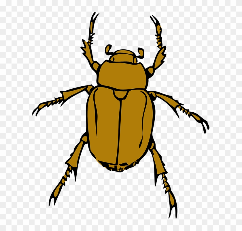 Bugs, Bug, Insect, Animal, Beetle, Insects - Beetle Clipart #571442