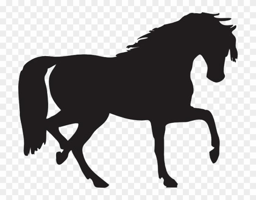 Equine Anatomy And Biomechanics - Horse Silhouette Clip Art #571946