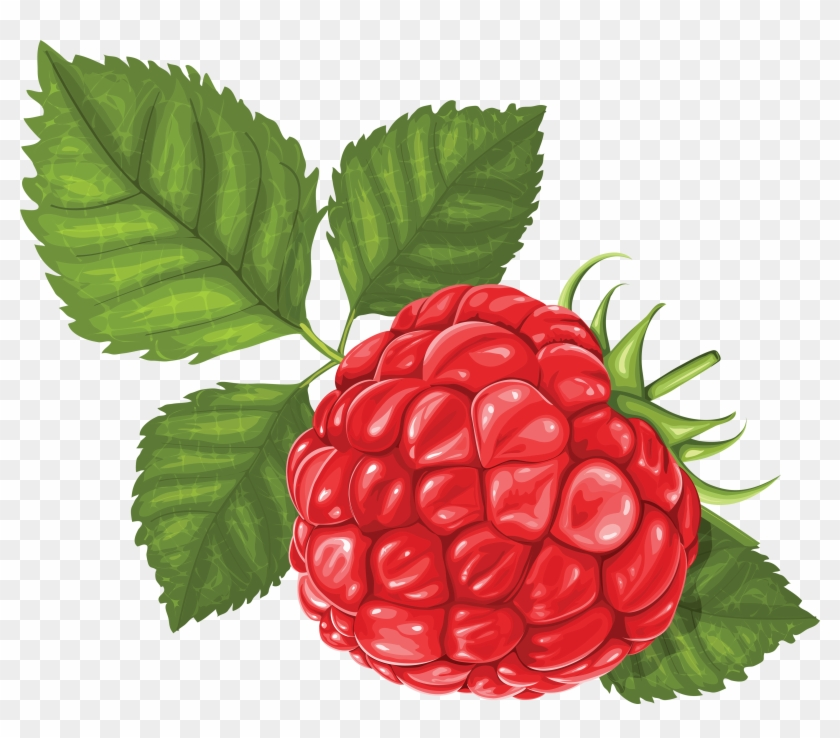 Rraspberry Png Image - Raspberry Illustration #572060