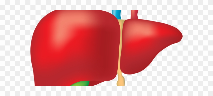 Signs Your Liver Is Sluggish And What To Do About It - Liver #572282