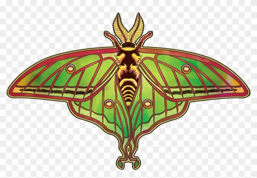 Spanish Luna Moth - Swallowtail Butterfly #573945
