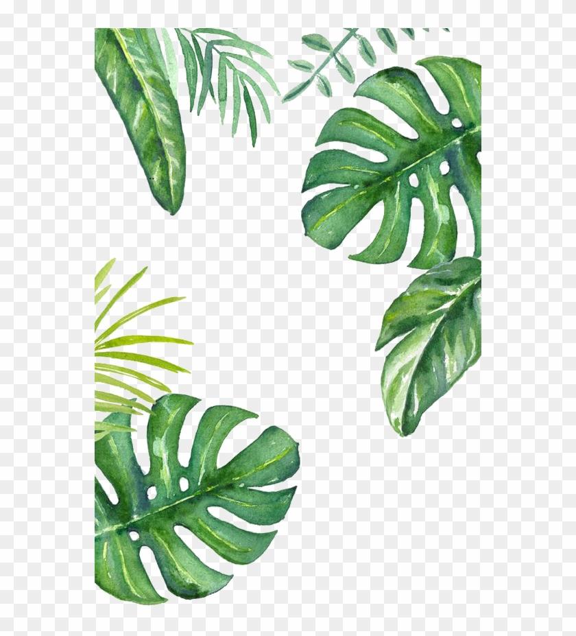 Banana Leaf Wallpaper Plant Wallpaper Iphone Free Transparent Png Clipart Images Download