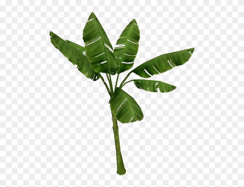 Palm Tree - Banana Palm Png #575135