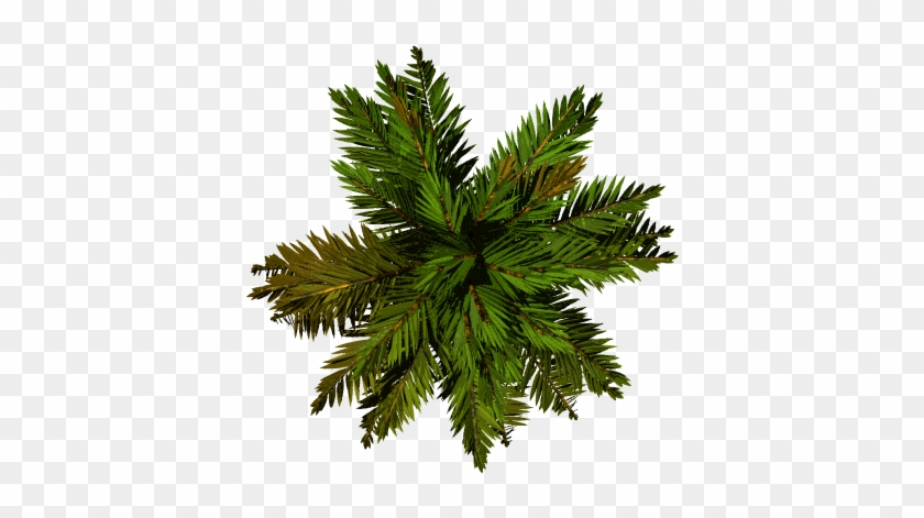 Real Palm Tree Png Palm Tree Transparent Background - Palm Tree Top View Png #575174