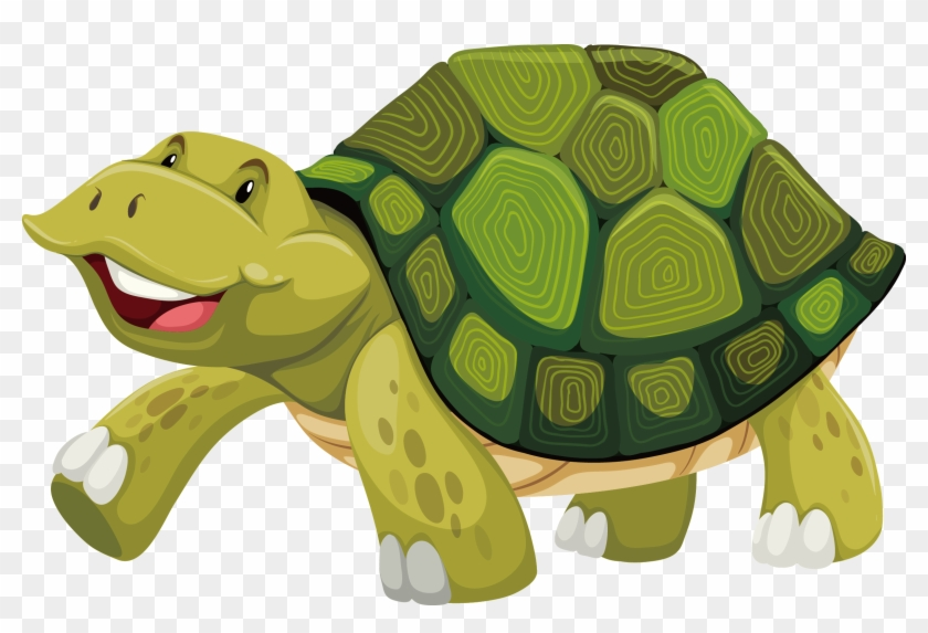 Turtle Shell Stock Photography Illustration Turtle Shell Cartoon